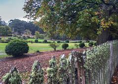 Port Arthur, Tasmania (Marian Pollock) Tags: australia portarthur tasmania iphonephotos garden landscape bushes trees fence lawn green moss