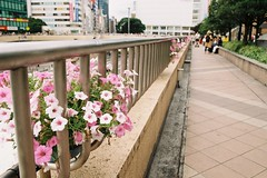 The floral deck (しまむー) Tags: pentax mz3 smc a 28mm f28 kodak gold 200 北海道&東日本パス 普通列車 local train trip east japan 東北本線 縦断