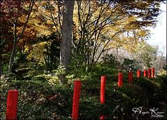 Red Garden - LongHouse Reserve... (angelakanner) Tags: canon70d tamron18400 longhousereserve longisland sculpture red
