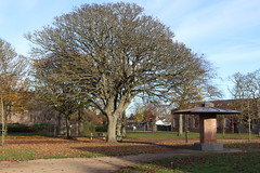 Queen Elizabeth II Field,Montrose_nov 19_581 (Alan Longmuir.) Tags: queenelizabethfield tayside montrose
