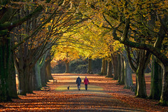 Right Time Right Place (Paul C Stokes) Tags: clifton bristol uk england sw southwest south west country promenade avenue trees treeline bench benches park leaves fall falling autumn figure dappled light canopy sony a7r2 a7rii 70300g quiet couple walk walking two man woman dog autumnal colour color sun sunny sunlit