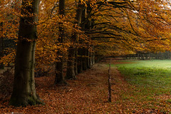 Autumn 🍂 (CarolienCadoni..) Tags: sony ilcea9 sel2470gm autumn autumncolors trees path leaves autumnleaves autumnforest ngc nature drenthe poolshoogte