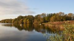 Swans Landing, White Swan Lake, Dinton Pastures (rq uk) Tags: rquk nikon d750 sun water lake dintonpastures trees reflections whiteswanlake nikond750 afsnikkor1835mmf3545ged swans landing
