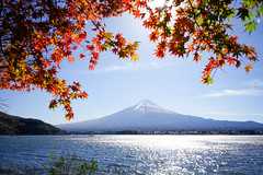 fujisan (flrent) Tags: lake kawaguchi mount fuji koyo leaves automn japan japon nihon autumn fall mountain peak