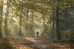 Autumn scene (dewollewei) Tags: cycle forest oldemeijer fietsen mountainbike sport woods fall hardenberg herfst ochten licht