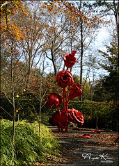 Stop And Smell The Roses... (angelakanner) Tags: canon70d tamron18400 longhousereserve longisland red sculpture