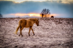 "Horse in the Snow (JuanJ) Tags: nikon d850 lightroom art bokeh lens light landscape happy naturephotography outside nature people white green red black pink skyportrait location architecture building city square squareformat instagramapp shot awesome supershot beauty cute new flickr amazing photo photograph fav favorite favs picture me explore interestingness friends dof sunset sky flower night tree flowers portrait fineart sun clouds kentucky horses equine horse kentuckyhorsepark betterinthebluegrass kyhorses nikonfxshowcase ""nikon fx showcase"""