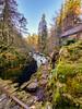The hermitage woodland walk