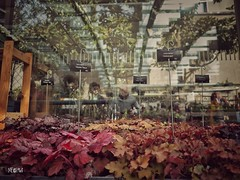 Riflessi autunnali quasi in primavera. (iw2ijz) Tags: vintage villa museo necchi campiglio milano milan italia italy lombardia panasonic lumix olympus 12m 43 2019