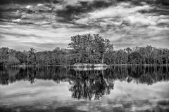 Accidentally deleted. (Igor Danilov Philadelphia) Tags: lake island trees november fall autumn water reflection magnolia sharpness sharp mono blackandwhite contrast
