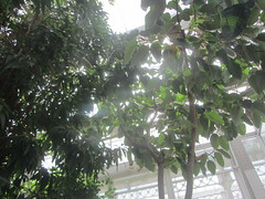 Leaves against the light. (d.kevan) Tags: