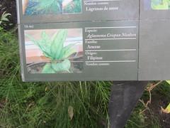 Information plants  TR - 062, Arganzuela  Hothous, Madrid (d.kevan) Tags: plants arganzuelahothouse madrid zonatropical1 description photos origin species commonname family