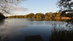 White Swan Lake In Early Morning Sun - 1, Dinton Pastures (rq uk) Tags: rquk nikon d750 sun water lake dintonpastures trees reflections nikond750 afsnikkor1835mmf3545ged whiteswanlake