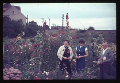 . (Kaïopai°) Tags: vintage dia slide blumen garten staudenbeet staude garden natur blüten sommer blüte frau woman femme kleid
