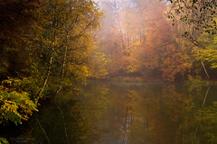 Forest pond (Rita Eberle-Wessner) Tags: forest wald woods teich pond lake waldsee bäume trees birken birches buchen beeches laubwald deciduousforest leaves laub blätter foliage herbst fall autumn herbstlaub november spiegelung reflection nebel fog fogggy neblig atmosphäre atmosphere morgennebel misty odenwald