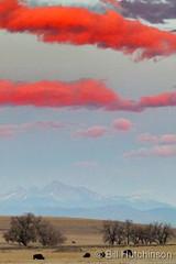 November 16 ,2019 - Bison graze under brilliant colored clouds. (Bill Hutchinson)