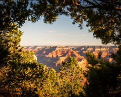 Grand Canyon National Park       Grandview Framed (JB_1984) Tags: view vista overlook rim canyon geologicalformation red rock trees framing nationalpark nps grandviewpoint southrim grandcanyonnationalpark grandcanyon arizona az usa unitedstates nikon d500 nikond500