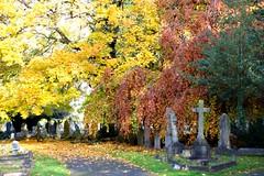 Photo of Teddington Cemetery: autumn colours