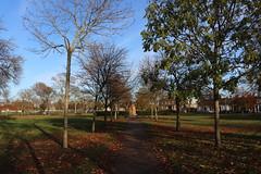 Scott Park,Montrose_nov 19_604 (Alan Longmuir.) Tags: scottpark tayside montrose