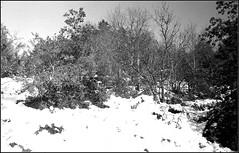 Essalois sous la neige      Zorki 1D  sERENAR 35MM   (17) (Bokey Shutter) Tags: zorki1d jupiter8 noirblanc loire
