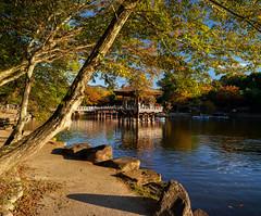 Ukimido pavilion (Tim Ravenscroft) Tags: pavilion lake reflections foliage ukimido nara japan fall autumn hasselblad hasselbladx1d