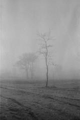 Mist air. (verblickt) Tags: zenit zenite fp4 ilford negative film negativefilm greyscale blackandwhite nature fog foggy rural