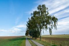 Unterwegs auf der Insel Poel  (5) (berndtolksdorf1) Tags: deutschland mecklenburgvorpommern landschaft landscape weg bäume trees himmel sky inselpoel outdoor feld