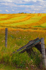 Location, location, location (stevenbulman44) Tags: field harvest landscape color canon 70200f28l yellow green blue fence old cloud white tripod gitzo lseries filter polarizer sky outdoor autumn fall filed wood