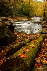 Great Smoky Mountains National Park (Steve O'Day) Tags: smokymountains canon timelapse travel explore outdoors nature fall autumn river