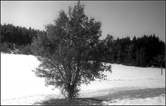 Essalois sous la neige      Zorki 1D  sERENAR 35MM   (11) (Bokey Shutter) Tags: zorki1d jupiter8 noirblanc loire