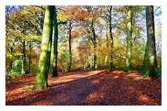 Warley Woods last Hoorah. 19 (Phoenix Knight.) Tags: warleywoods robindemel beechtrees birmingham