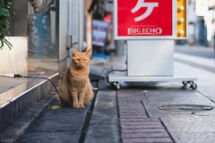 猫 (fumi*23) Tags: ilce7rm3 sony sel85f18 85mm emount fe85mmf18 a7r3 animal alley street bokeh cat chat gato neko ねこ 猫 ソニー