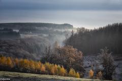 17112019-DSC_0059 (vidjanma) Tags: bonnerue arbres automne brume givre matin vallée