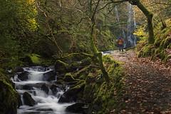 'A rare glimpse of me'. (Meurig2011) Tags: rhaedrmawr llanberis gwynedd northwales waterfall trees autumn rocks river snowdonia wales