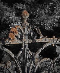 Grabmale und Friedhöfe in Magdeburg (Helmut44) Tags: deutschland germany sachsenanhalt magdeburg friedhof cemetery grave grabmale grab kunstschmiede grabeinfassung gitter zaun rost