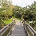 Bridge into the palm forest at Bang Kachao's Sri Nakhon Khuean Khan Park And Botanical Garden in Bangkok