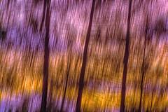 Adventures are waiting in a Distance... (Ody on the mount) Tags: abstrakt bäume dolomiten em5ii filmkorn kunst licht omd olympus pflanzen sonnenuntergang unschärfe urlaub wald abstract art blur forest grain icm light orange sunset trees woods