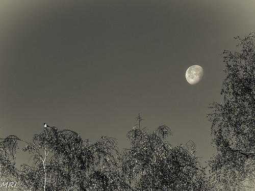 Derniers Rayons de Lune-2