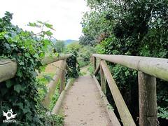 Stage 2 Grado-Salas Primitive Way (asanza23n) Tags: primitive way saint james the pilgrim pilgrims principado de asturias camino santiago primitivo