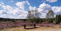 Heidelandschaft ..... Platz mit Weitblick.... (Fritz Zachow) Tags: lüneburger heide niedersachsen landschaft germany heideblüten nordheide