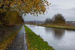 SJX_0550 - Dreich on the Mile (SWJuk) Tags: swjuk uk unitedkingdom gb britain england lancashire burnley home canal leedsliverpoolcanal straightmile dreich raining water raindrops reflections towpath vanishingpoint grass trees path footpath grey greysky clouds cloudy nikon d7200 nikond7200 18140mm 2019 nov2019 autumnwinter rawnef lightroomclassiccc