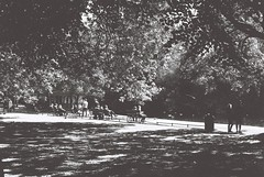 Dappled Light, St. Stephen's Green (Mark Carmody) Tags: analoguephotography analog analogue film filmisnotdead filmphotography filmisalive f washi filmwashi filmwashid aerospace canon canona1 takumar supertakumar55mmf18 blackandwhite portraits streetscape landscape