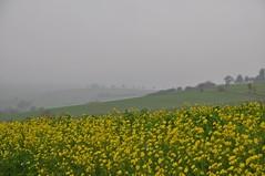 Novemberleuchten (Uli He - Fotofee) Tags: ulrike ulrikehe uli ulihe ulrikehergert hergert nikon nikond90 fotofee weyhers november herbst regnerisch regen