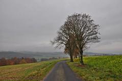 November-Spaziergang (Uli He - Fotofee) Tags: ulrike ulrikehe uli ulihe ulrikehergert hergert nikon nikond90 fotofee weyhers november herbst regnerisch