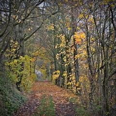November-Spaziergang (Uli He - Fotofee) Tags: ulrike ulrikehe uli ulihe ulrikehergert hergert nikon nikond90 fotofee weyhers november herbst regnerisch regen