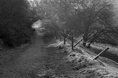 MorningWalk (Tony Tooth) Tags: nikon d7100 nikkor 40mm path pathway footpath countryside bw blackandwhite monochrome leek staffs staffordshire