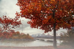Nothing like a foggy day to see things in a different way.... (cesar.toribio1218) Tags: fog foggyday nycparks natureinnewyork naturescolors autumncolors autumn new york beautiful view outside nature light photography composition melancholy red photo colors abeautifulmoment timeless distance