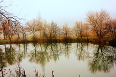 mirror (majka44) Tags: tree lake water light autumn landscape slovakia košice nature view reflections mirror waterscape