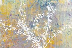 321/365 (Jane Simmonds) Tags: woodland berries abstract autumn mutlipleexposure 3652019