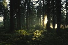 A Spark of Light (Ornaim) Tags: forest tree haut folin morvan nievre saone et loire bourgogne humid grass moss mild sun sunlight sunrays atmospheric landscape nature dark shadows green light france moutain autumn fall sunset nikon d850 1635 woods